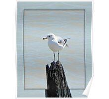 Birds eye view © Poster