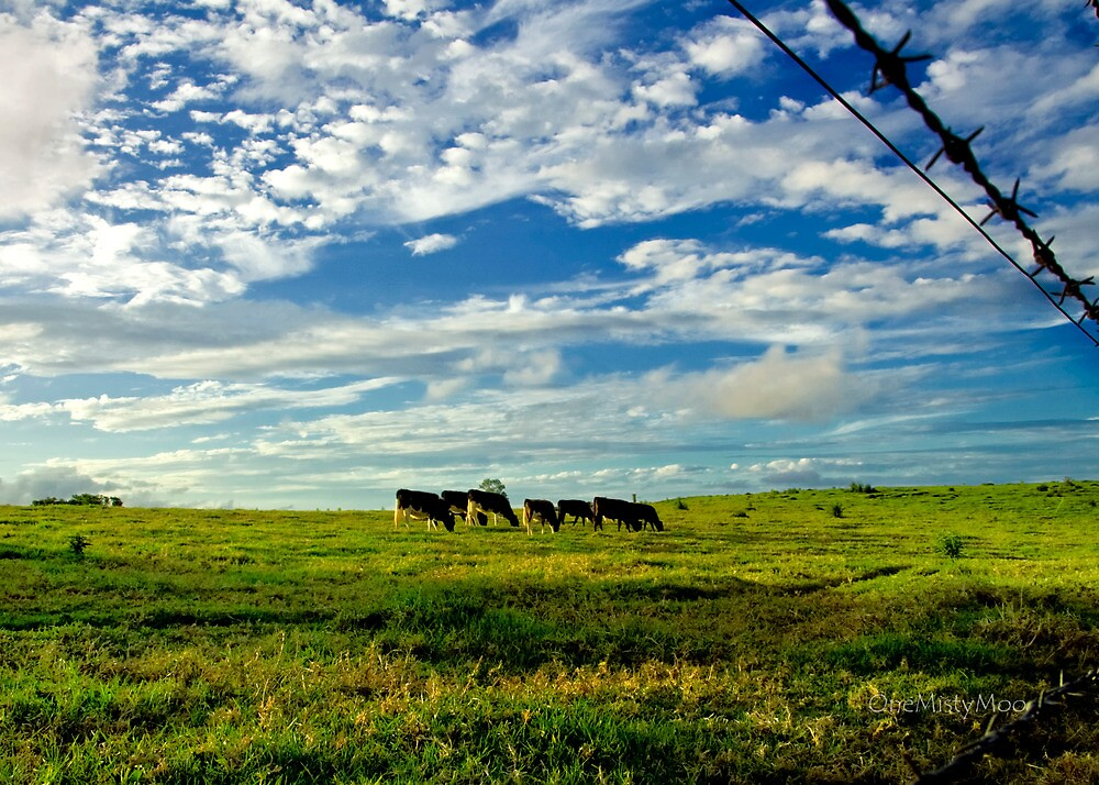 Late Afternoon Grazing by Marian Moore
