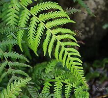 Forest of Ferns by Marian Moore