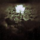 Lotus by Brian Webb