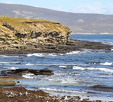 Carcass Island in The Falklands by Carole-Anne