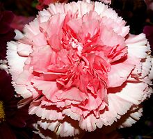 The pinkness of being by ♥⊱ B. Randi Bailey