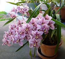 Orchid plant by machka