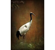 Bringer of luck - Japanese Crane Photographic Print