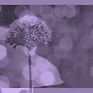 Allium ©  by JUSTART