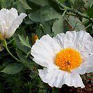 White exotic flower by Debu55y