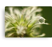 Drop on Fluff Canvas Print