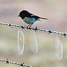 Webbed Barbs plus Bird by Bill  Robinson