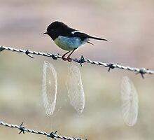 Webbed Barbs plus Bird by Bill  Robinson