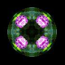 Pink Hydrangea Kaleido by Matthew Walmsley-Sims