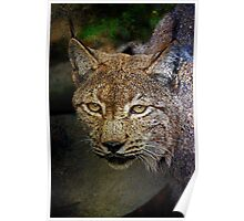 Caracal (The Persian Lynx) Poster