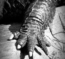 Alligator's Foot by Karen Tregoning