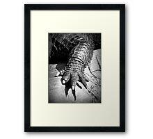 Alligator's Foot Framed Print