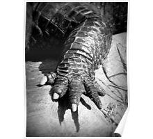 Alligator's Foot Poster