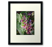 The colours of grape! Framed Print