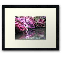 Pretty pink azaleas with shadow over stream  Framed Print