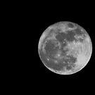 Moonlight card by colleen e scott
