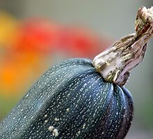 Courgette - Zucchini I by vbk70