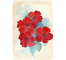 Red & Blue Hibiscus Photographic Print