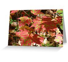 Fall- Little Lake, Michigan Greeting Card