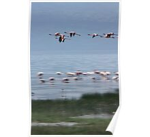Flamingo Flight Poster