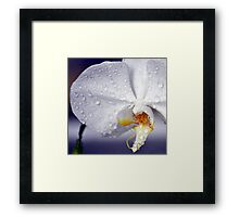 Rain Drops on Orchid Framed Print