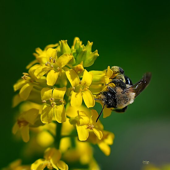 Fanfare For The Common BumbleBee by Lois  Bryan