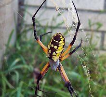Yellow Venom by Sean Paulson
