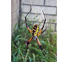 Yellow Venom Photographic Print