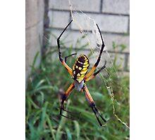 Yellow Venom Photographic Print