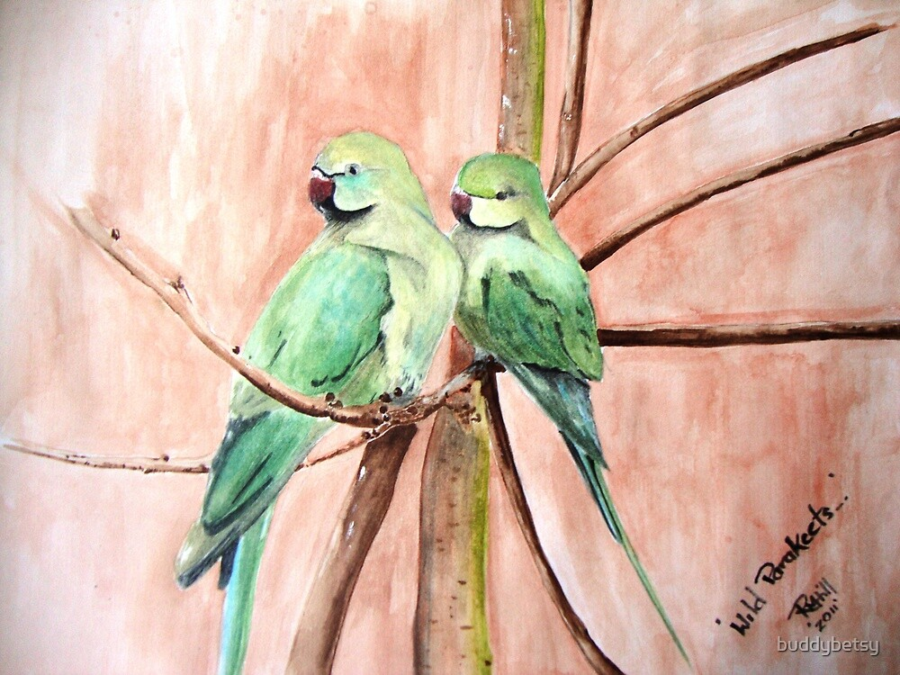 Wild parakeets by buddybetsy