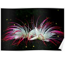 Flowers On Black Sand Beach Poster