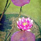 Pretty water lily © by Dawn M. Becker