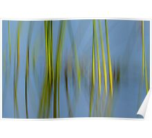 Reeds and Blue Water Poster