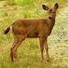 Little Deer still with spots! by Elaine Bawden