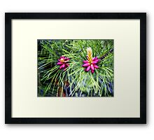 New Life (Ponderosa Pine) Framed Print