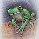 White Lipped Tree Frog by thedrawinghands