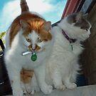 """""""Kiya and Momma Cat"""" ~Performing The Balancing Act by Toni Kane"""