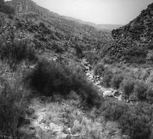 Along the Stream - hiking the Rio Grande Rift by njordphoto
