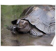 Rainy Day Tortoise Poster