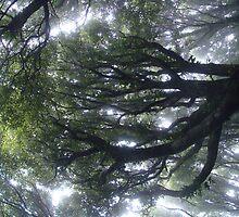Mysterious Forest by Sonnenschein