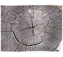 Top view of a cut tree closeup Poster