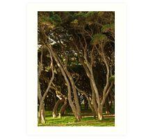 Tea Trees, Angesea Coastline Art Print