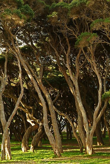 Tea Trees, Angesea Coastline by Joe Mortelliti