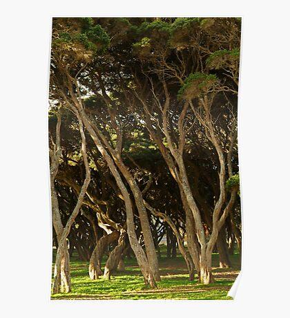 Tea Trees, Angesea Coastline Poster