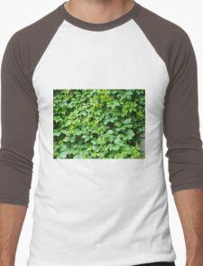 Wallpaper from leaves of grapes Men's Baseball ¾ T-Shirt