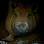 Pig Portrait by artstoreroom