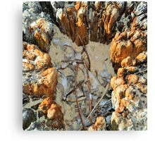 DRIFTWOOD TREE STUMP FILLED WITH SAND Canvas Print