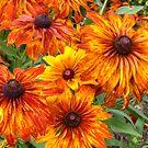 Helenium flowers  by Debu55y