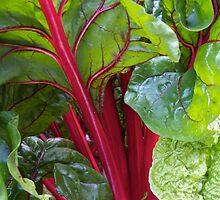 Chard by John Thurgood